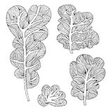 Set of hand drawn different trees Royalty Free Stock Image
