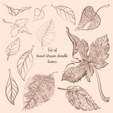Set of hand-drawn doodle autumn forest leaves Stock Photography