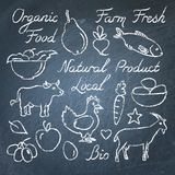Set of hand drawn eco food sketches on chalkboard. Set of hand drawn eco food sketches and lettering on chalkboard Royalty Free Stock Photography