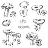 Set of hand drawn edible mushrooms Royalty Free Stock Image