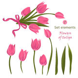 Set of hand-drawn elements for bouquet of pink tulips. A good idea for your design, poster, greeting card, web banner. Vector illustration Royalty Free Stock Photos