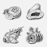 Set of hand drawn, engraved fresh fruits, vegetarian food, plants, vintage looking common fig, persimmons and pitaya Royalty Free Stock Image