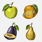 Set of hand drawn, engraved fresh fruits, vegetarian food, plants, vintage looking green apple, orange and pear, plum. Set of hand drawn, engraved fresh fruits Stock Photo