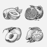Set of hand drawn, engraved fresh fruits, vegetarian food, plants, vintage looking kiwi, peach yellow lemon and. Pomegranate Stock Image