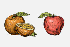 Set of hand drawn, engraved fresh fruits, vegetarian food, plants, vintage looking orange and red apple Royalty Free Stock Photos