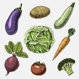 Set of hand drawn, engraved vegetables, vegetarian food, plants, vintage looking cabbage, eggplant and beetroot Stock Images