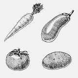 Set of hand drawn, engraved vegetables, vegetarian food, plants, vintage looking carrot, potato and tomato, eggplant. Set of hand drawn, engraved vegetables Royalty Free Stock Images