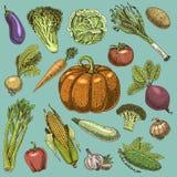 Set of hand drawn, engraved vegetables, vegetarian food, plants, vintage looking pumpkin, cabage and tomato, lettuce stock illustration