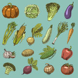 Set of hand drawn, engraved vegetables, vegetarian food, plants, vintage looking pumpkin, cabage and tomato, lettuce Royalty Free Stock Images