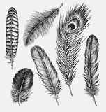 Set of Hand Drawn Feathers Royalty Free Stock Photo