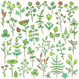 Set of hand-drawn floral elements. Set of 40 hand-drawn floral elements. Different flowers, leafs, berries, and other nature elements Royalty Free Stock Photo