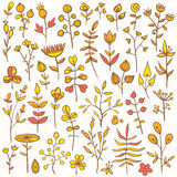 Set of hand-drawn floral elements. Set of 40 hand-drawn floral elements. Different flowers, leafs, berries, and other nature elements Royalty Free Stock Photography