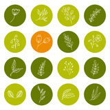 Set of hand drawn floral icons Stock Image