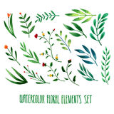 Set of hand drawn floral watercolor  elements Royalty Free Stock Photography