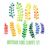 Set of hand drawn floral watercolor  elements Stock Image