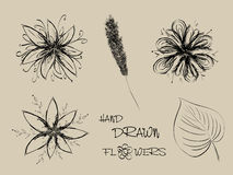Set of hand drawn flowers. Isolated objects Royalty Free Stock Photo