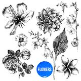 Set of hand drawn flowers Royalty Free Stock Images