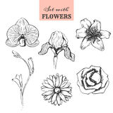 Set with hand drawn flowers. Rose flower, iris flower, lily flower, freesia flower, orchid flower, chrysanthemum flower. Isolated vector illustration on white vector illustration