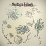 Set of hand-drawn flowers Vintage Labels Stock Photo