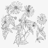 Set of hand drawn flowers  on white background. Royalty Free Stock Photo