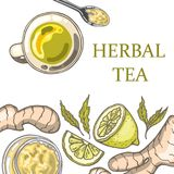 Set of hand drawn ginger tea elements. Herbal tea. Vector illustration Royalty Free Stock Photo