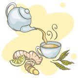 Set of hand drawn ginger tea elements. Teapot, cup, green tea and ginger. Vector illustration Stock Photography