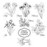 Set of hand drawn graphic sketch of spring flowers for flower garden.Iris, poppy, tulip, narcissus, mimosa and malus flowers. Set of hand drawn graphic sketch of vector illustration