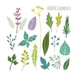 Set of hand drawn herbal graphic elements, leaves,  Stock Image
