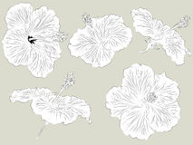 Set of hand drawn Hibiscus flowers Royalty Free Stock Photo