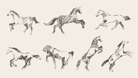 Set hand drawn horses vector illustration sketch Stock Photography