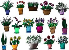 A set of hand drawn indoor plants and flowers royalty free illustration