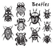 Set of hand drawn ink bugs, beetles Royalty Free Stock Photos