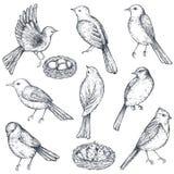Set of hand drawn ink sketch birds, nest, chicks Royalty Free Stock Image