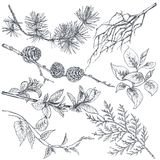 Set of hand drawn ink sketch spring branches Stock Image