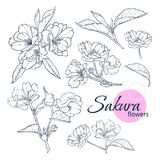 Set of hand drawn Japanese blossom sakura flowers. Line-art style illustration. Coloring book for adult and children. vector illustration