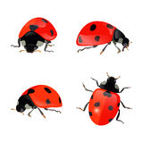 Set of hand drawn ladybugs. Vector ladybirds collection. Royalty Free Stock Image