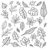 Set of leaves doodle. Set of hand drawn leaves  illustration isolated on white background royalty free illustration