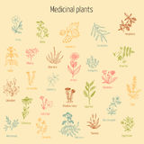 Set of hand drawn medicinal herbs. Vintage collection of hand drawn medicinal herbs and plants. Vector illustration Stock Photography