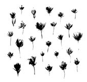 Set of hand drawn modern flowers. Grunge style ink paint elements for design. Black isolated vector on white background.  vector illustration