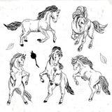 Set of hand drawn monochrome sketch horses Stock Photos