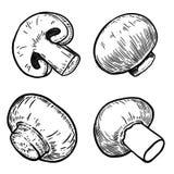 Set of hand drawn mushrooms illustrations. Design elements for poster, menu, banner, menu. vector illustration