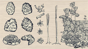 Set of hand-drawn nature elements. Stock Images