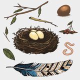 Set of hand drawn nest. leaves. berry. egg and food for birds. House for birds Royalty Free Stock Photos