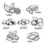 Set of hand drawn nuts Royalty Free Stock Image