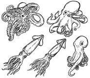 Set of hand drawn octopus and squid illustrations isolated on white. Design element for menu decoration, flyer, banner, poster. Vector illustration royalty free illustration