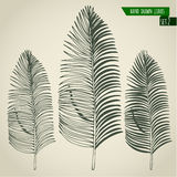 Set of hand drawn palm leaves Stock Images