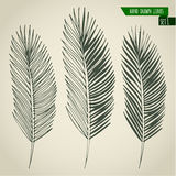 Set of hand drawn palm leaves Royalty Free Stock Image