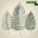 Set of hand drawn palm leaves Royalty Free Stock Photography