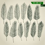 Set of hand drawn palm leaves Stock Image