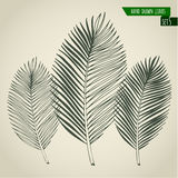 Set of hand drawn palm leaves Royalty Free Stock Images